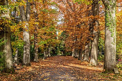 Baumallee im Herbst - p401m2217512 von Frank Baquet