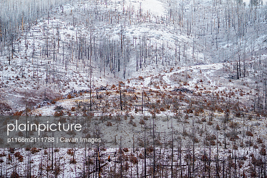 Burned trees on Oregon Mountain in Winter Covered With Snow - p1166m2111788 by Cavan Images
