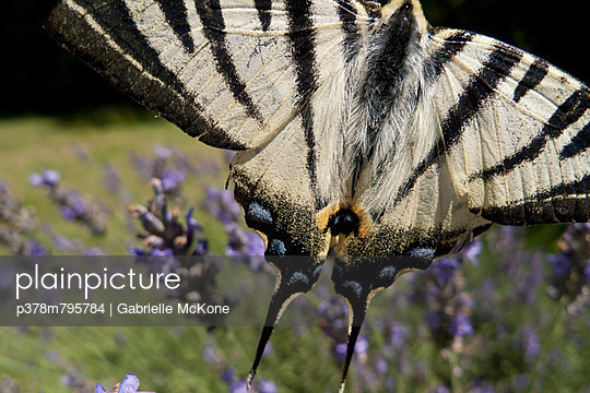Black and white striped butterfly - p378m795784 by Gabrielle McKone