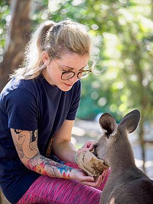 Young woman feeding Eastern grey kangaroo (Macropus giganteus) - p1427m1504579 by WalkerPod Images