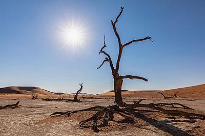 Africa, Namibia, Namib-Naukluft National Park, Deadvlei, dead acacia trees in clay pan - p300m2023498 von Fotofeeling