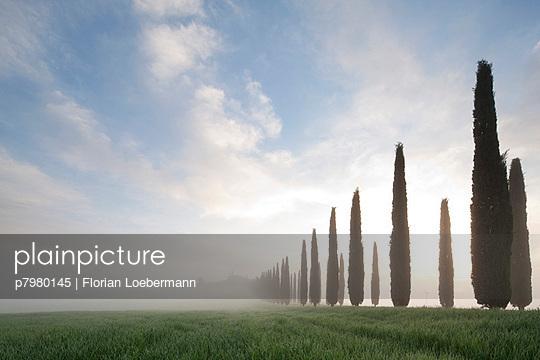 Zypressenallee - p7980145 von Florian Loebermann