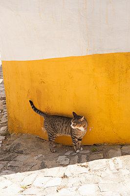 Straßenkatze  - p299m949386 von Silke Heyer