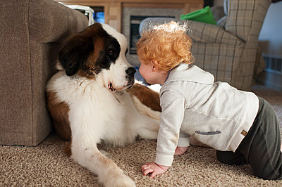 Happy toddler boy gets close to large dogs face on floor at home - p1166m2136696 by Cavan Images