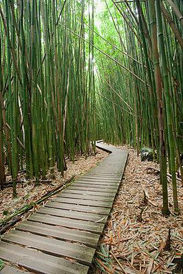 Hawaii, Maui, Kipahulu, Haleakala National Park, Trail through bamboo forest on the Pipiwai trail. - p442m860366 by Jenna Szerlag