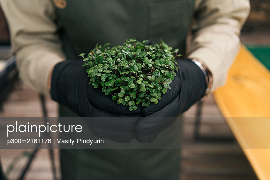 Close-up of man holding microgreen plant - p300m2181178 by Vasily Pindyurin