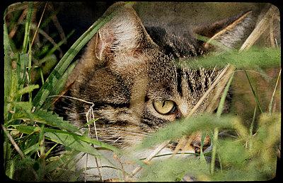 Katze - p4500320 von Hanka Steidle