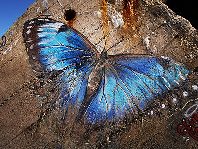 Blue butterfly, painting on bunker, Atlantic coast - p945m2215115 by aurelia frey