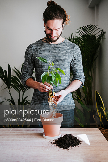 Young man gardening avocado plant in flower pot while standing at home - p300m2242544 by Eva Blanco