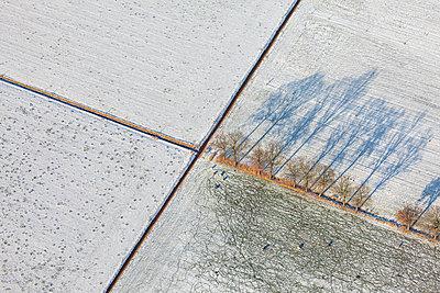 Shadows of oaks and tracks of sheep, aerial photography near Dalfsen - p1144m967189 by Sjon Heijenga