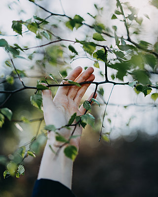 Woman's hand touching branch - p1184m1462619 by brabanski
