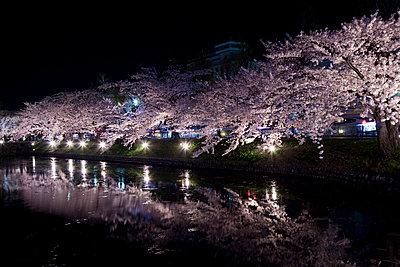 Matsumoto castle and cherry blossoms - p307m826838f by Tadao Yamamoto