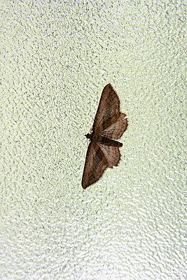 Motte - p4641316 von Elektrons 08