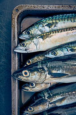 Fisch - p959m1170780 von Appold