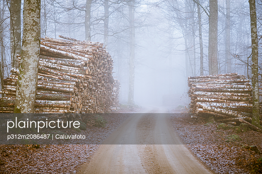 Timber lying along footpath - p312m2086487 by Caluvafoto