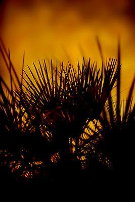 Palm trees - p1028m2206416 by Jean Marmeisse