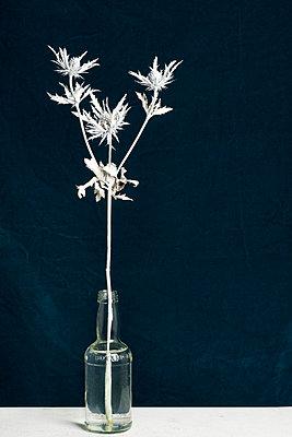 blooms - p1323m1510702 von Sarah Toure