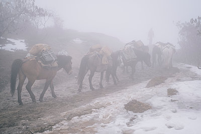 Lastenpferde auf dem Himalaya Trek zum Kangchendzönga  - p1600m2192282 von Ole Spata