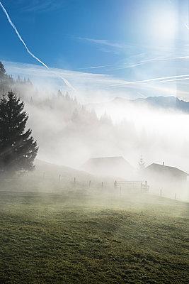 Nebel - p954m1185244 von Heidi Mayer