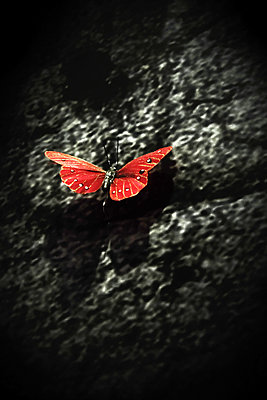 Red coloured butterfly - p945m2157543 by aurelia frey