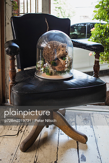 Stuffed hedgehog under a bell jar on an armchair - p728m2219731 by Peter Nitsch