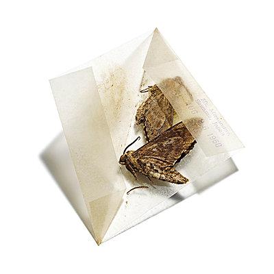 Schmetterlinge von einer Sammlung, Insekten - p1316m1161143 von Robert Striegl
