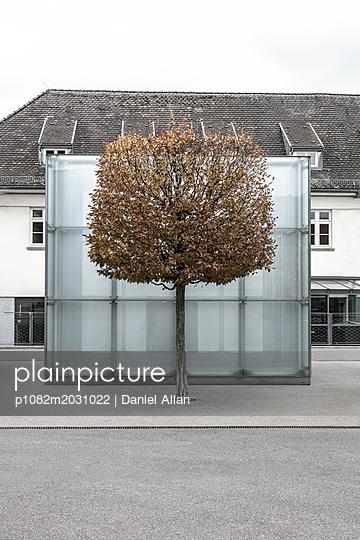 Grey Day in Autumn - p1082m2031022 by Daniel Allan