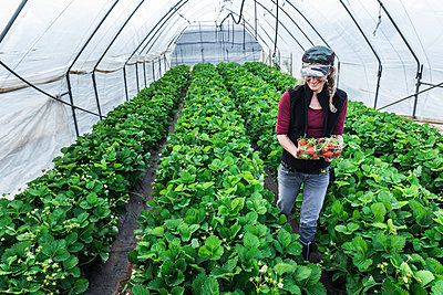Smiling mature woman holding containers with fresh organic strawberries at greenhouse - p300m2199245 by 27exp