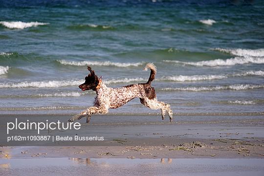 Hundesommer am Meer - p162m1093887 von Beate Bussenius