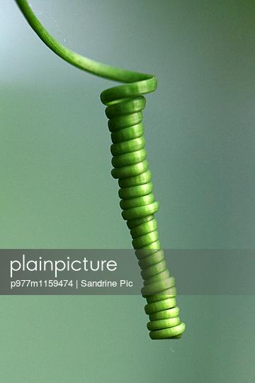 Spiralförmiger Stengel - p977m1159474 von Sandrine Pic