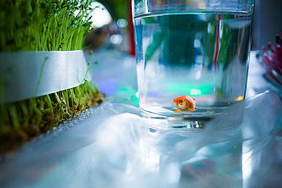 Goldfisch im Glas - p1398m1445709 von Tabitha Genoveva Harter
