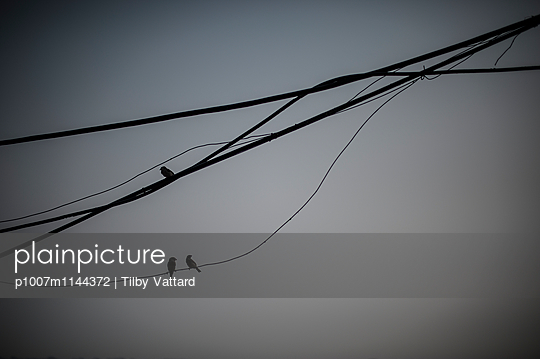 Birds on electric wire - p1007m1144372 by Tilby Vattard