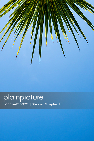 Green plam tree with blue sky and bright sunshine - p1057m2100821 by Stephen Shepherd