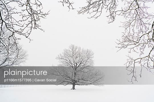 plainpicture - plainpicture p1166m1577395 - Bare trees on snow covered ... - plainpicture/Cavan Images/Cavan Social