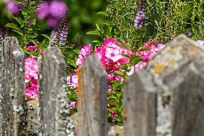 Blume - p488m2297774 von Bias