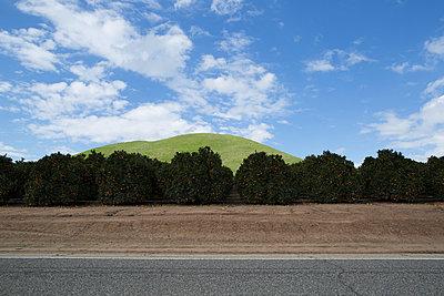 Orange trees at the roadside - p1134m1440780 by Pia Grimbühler