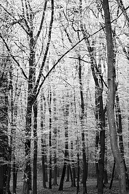 Germany, winter forest - p300m1536237 by Thomas Jäger