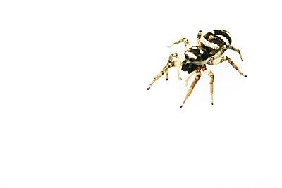 Lauernde Spinne - p4500112 von Hanka Steidle