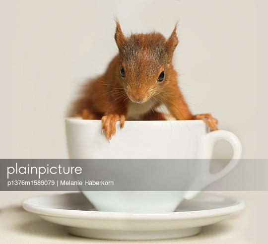 Eichhörnchen auf Kaffeetasse - p1376m1589079 von Melanie Haberkorn