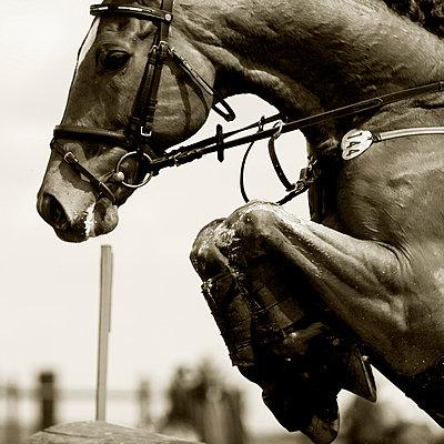 Pferd beim Sprung - p9792893 von Zickert