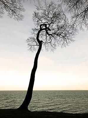 Trees on the Baltic Sea coast - p382m2100270 by Anna Matzen