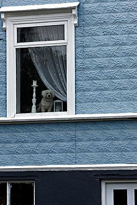 Hund schaut aus dem Fenster - p979m1081114 von Paul Mayall