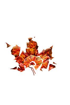 Herbstblatt Variationen - p1212m1194509 von harry + lidy