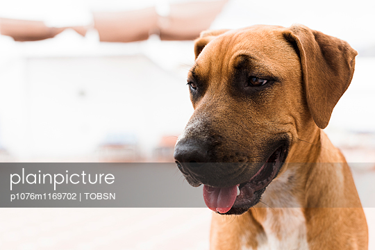 MIschlings Hund - p1076m1169702 von TOBSN