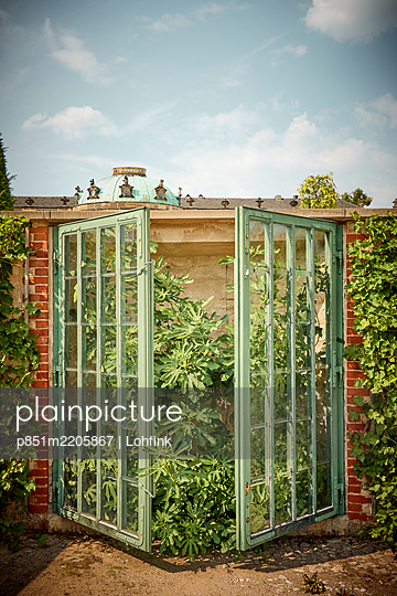 Fig tree, protected behind glass, Sanssouci, Potsdam - p851m2205867 by Lohfink