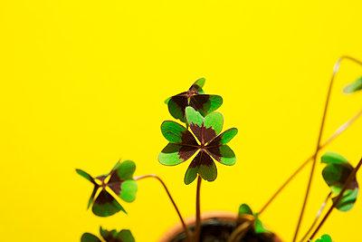 Lucky clover - p1149m2126916 by Yvonne Röder