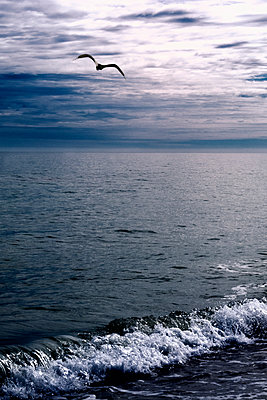 Bird Flying Over Water - p1331m1169265 by Margie Hurwich