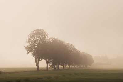 Trees in the morning light - p1585m2283797 by Jan Erik Waider