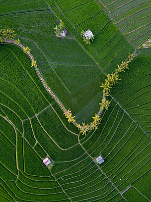 Indonesia, Bali, Aerial view of rice fields - p300m2042497 by Konstantin Trubavin