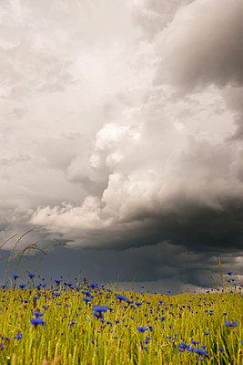 Ein schweres Gewitter zieht auf - p533m1182306 von Böhm Monika